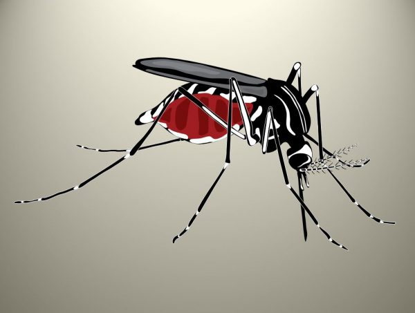 World Mosquito Day 2020